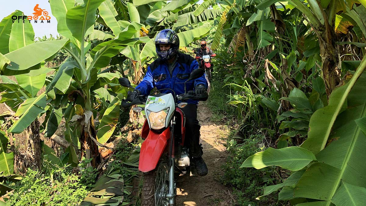 Vietnam enduro tours around Hanoi in one day through banana farm.